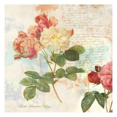 Redoute's Roses 2.0 I