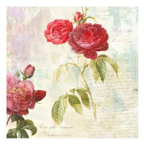 Redoute's Roses 2.0 II by Eric Chestier