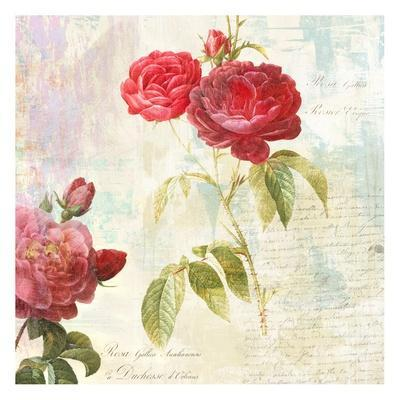 Redoute's Roses 2.0 II