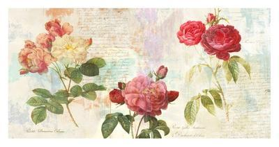 Redoute's Roses 2.0