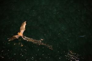 Attracted by a boat's light, bats fly close to the water in search of fish. by Eric Kruszewski