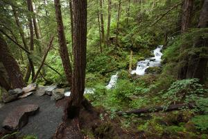 Waterfalls in a Stream Carve Through Wilderness and Forest by Eric Kruszewski