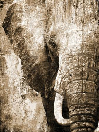 African Animals I - Sepia by Eric Yang