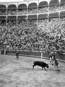 Duke of Pinohermoso, bullfighter,during a fight in Madrid's bull ring. by Erich Lessing