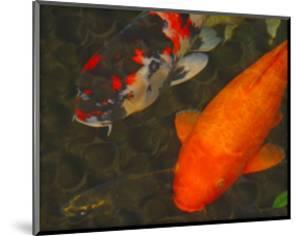 Green Rock Japanese Koi II by erichan