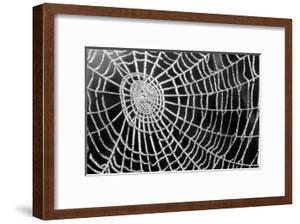 Spider Web Sparkle by erichan