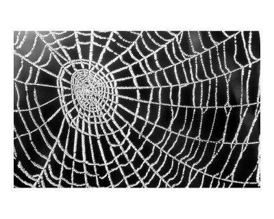 Spider Web Sparkle