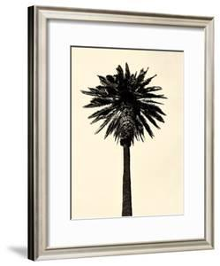 Palm Tree 1979 Tan by Erik Asla