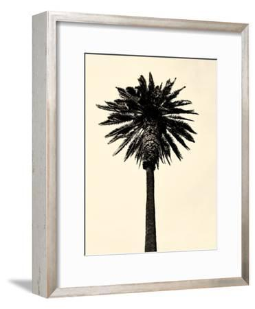 Palm Tree 1979 Tan