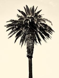 Palm Tree 1996 (Tan) by Erik Asla