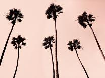 Palm Trees 1997 Copper-Erik Asla-Photographic Print