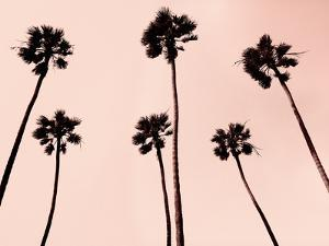 Palm Trees 1997 Copper by Erik Asla