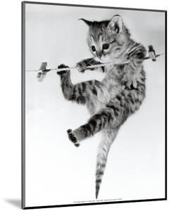 Kitten on a Clothes Line by Erik Parbst