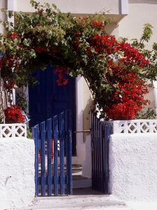 Bright Red Bougainvillea (Paper Flower) Trained in Arch Over Front of Cottage Santorini, Greece by Erika Craddock