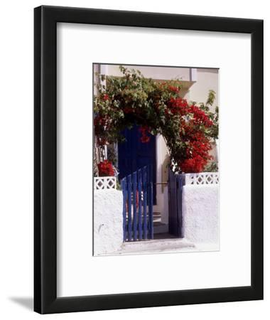 Bright Red Bougainvillea (Paper Flower) Trained in Arch Over Front of Cottage Santorini, Greece