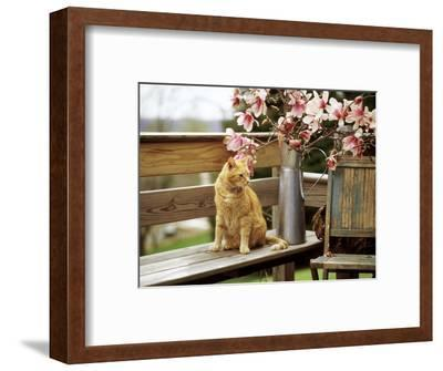 Close-up of Alert Ginger Cat, on Wooden Bench, with Twigs of Flowering Magnolia in Metal Jug