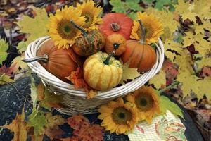 Harvested Pumpkins And Sunflowers by Erika Craddock