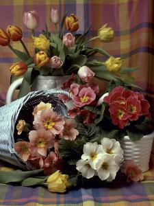 Primula and Tulipa, Vase and Basket on Ckecked Material by Erika Craddock