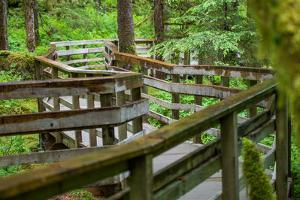 A Boardwalk Leads Through the Forest in Glacier Bay National Park by Erika Skogg