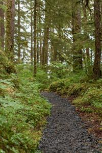 A Trail Leads Through the Forest in Alaska by Erika Skogg