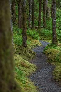 A Trail Leads Through the Forest in Glacier Bay National Park by Erika Skogg