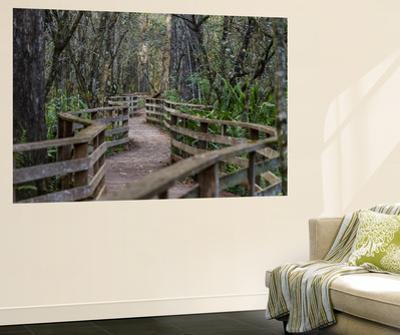 Boardwalk of Corkscrew Swamp, Florida