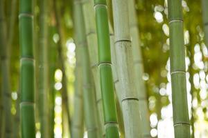 Bamboo and Bokeh I by Erin Berzel