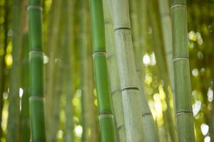 Bamboo and Bokeh II by Erin Berzel