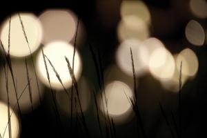 Bokeh Grass I by Erin Berzel