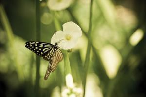 Butterfly I by Erin Berzel
