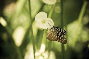 Butterfly II by Erin Berzel