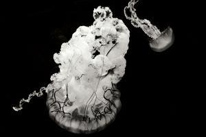 Jellyfish Glow VII by Erin Berzel