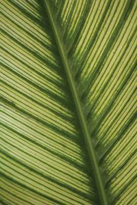 Leaf Detail 1 by Erin Berzel