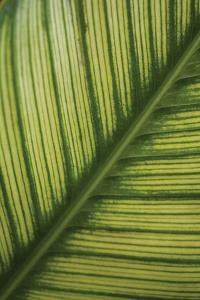 Leaf Detail 2 by Erin Berzel