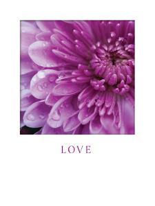 Love by Erin Berzel