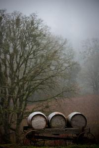 Oregon Wine Country I by Erin Berzel