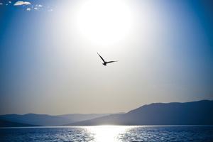 Take Flight by Erin Berzel