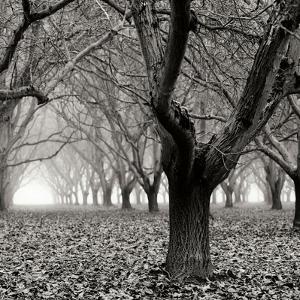 Tree Grove BW Sq I by Erin Berzel