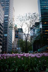 Tulips in Manhattan by Erin Berzel