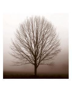 Stillness by Erin Clark