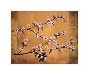 Cherry Blossoms-Erin Lange-Giclee Print