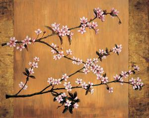 Cherry Blossoms by Erin Lange