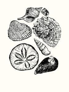 Shells 2 by Erin Lin