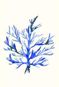 Ultramarine Growing 2 by Erin Lin