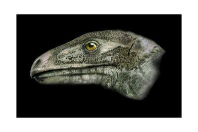 Erlikosaurus Portrait-Stocktrek Images-Art Print
