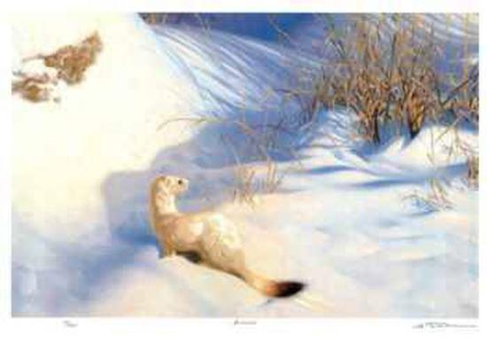 Ermine-Claudio D'Angelo-Limited Edition
