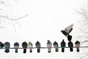 Row of Pigeons on Wire by Ernest McLeod