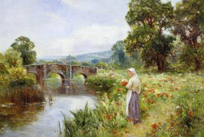 Poppies on the Riverbank
