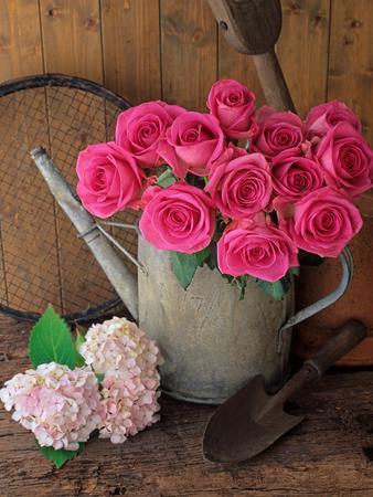 Garden Still Life with Roses Garden Tools