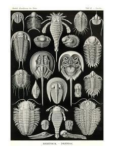 Athropods by Ernst Haeckel